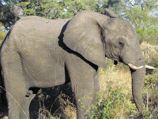In Zimbabwe, options include elephant-backed safaris