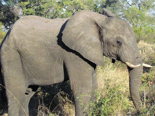 In Zimbabwe, options include elephant-backed safaris along the Zambezi River.