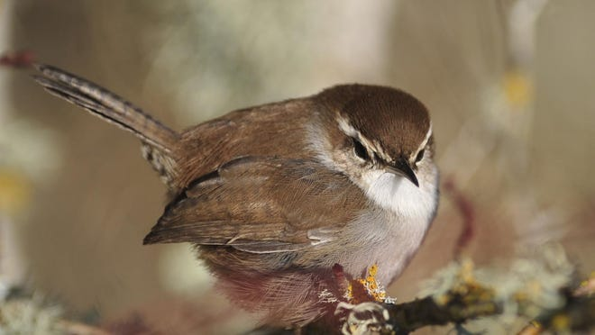 Birds benefit from seed heads and other garden debris being left over the winter.