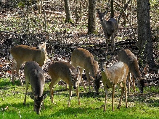 Mississippi wildlife commission passes deer baiting proposal for Mississippi out of state fishing license