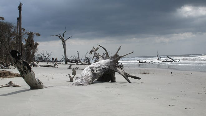With the ocean in the background, Boneyard Beach resembles a Dali landscape.