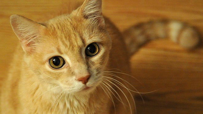A mayo clinic study showed 1 in 3 people who sought medical treatment for a cat bite on the wrist or hand were hospitalized.