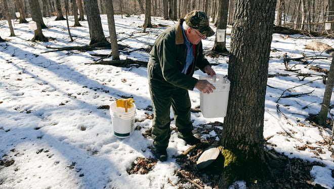 After tapping a spile into the tree, Harold Zipp hangs a bucket and puts on a cover to keep water and debris out as maple sap collection starts Friday, Feb. 25, at St. John's University.