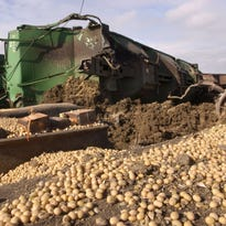 Breitinger: Soybean market scorched by trade talk; U.S. dollar in the green
