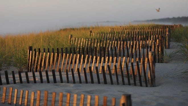 ORLEANS -- 09/08/20 -- Snow fencing along the dunes at Nauset Beach catches the early morning light.
