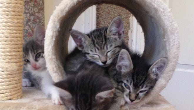 One More Chance has kittens of all colors, sizes, both male or female.