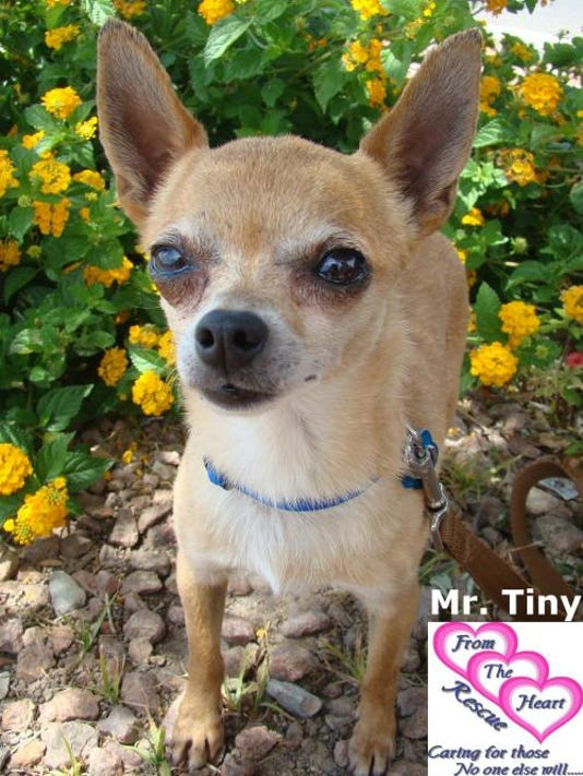 PET OF THE WEEK, MR TINY