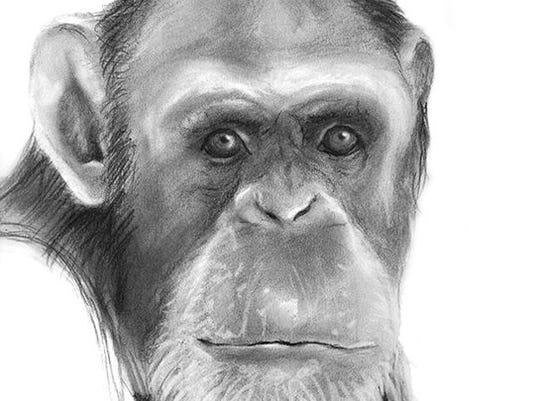 635840560615650988-monkey2.jpg