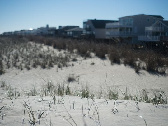 Grass begins to sprout on a dune in South Bethany