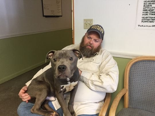 Repo, a 1-year-old pit bull terrier, hangs out in the lap of Clinton County Humane Society Director Jim Tate's lap.