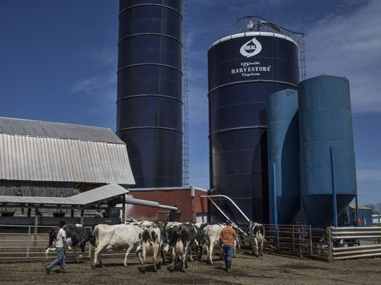 Employees herd cows into the milking facility Wednesday, April 20, 2016, at Reid Dairy Farm in Grant Township. The 220 cows on the farm can produce as much as 17,600 pounds of manure daily.