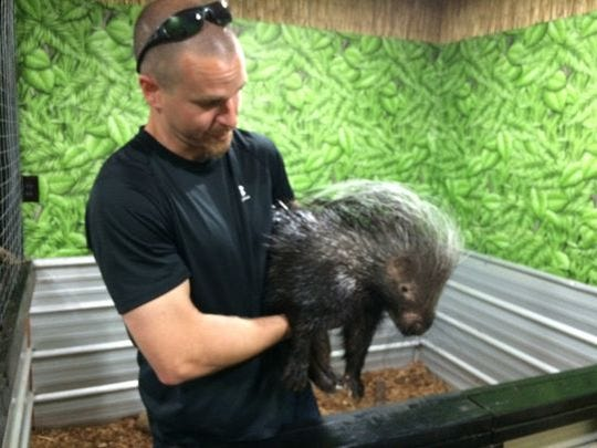 Brent Barrick holds Gamba, an African-crested porcupine, at Supe's Exotic Jungle in Tyrone Township between Hartland and Fenton.