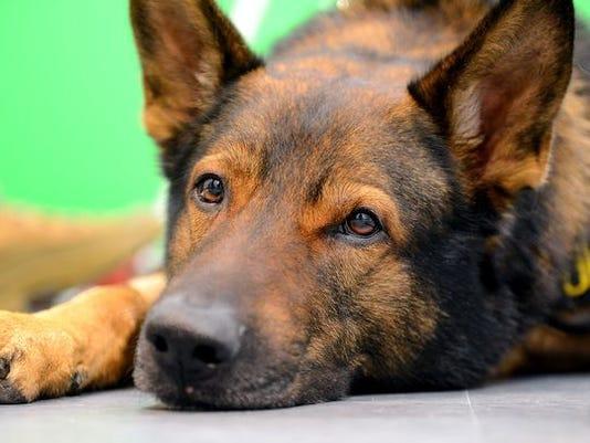636063303491106614-police-dog-635931190574784345-I-1-.JPG
