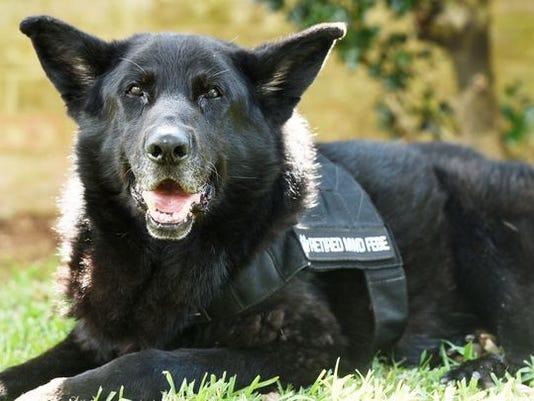 Febe the military dog