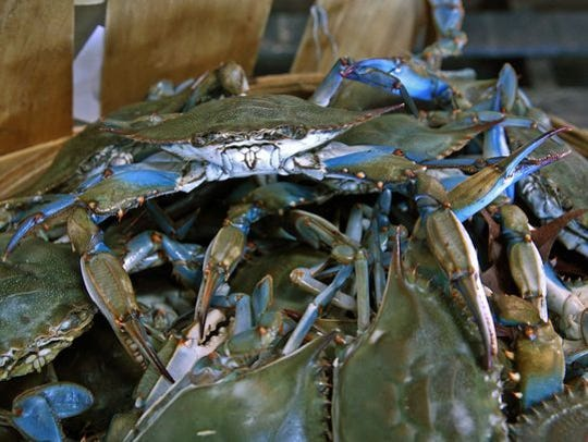 A bushel of blue claw crabs for sale at the Belford