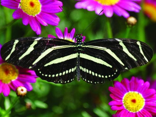 Flutterfest is a new spring festival that combines music, story and crafts dedicated to the butterfly at Desert Botanical Garden March 10-11.