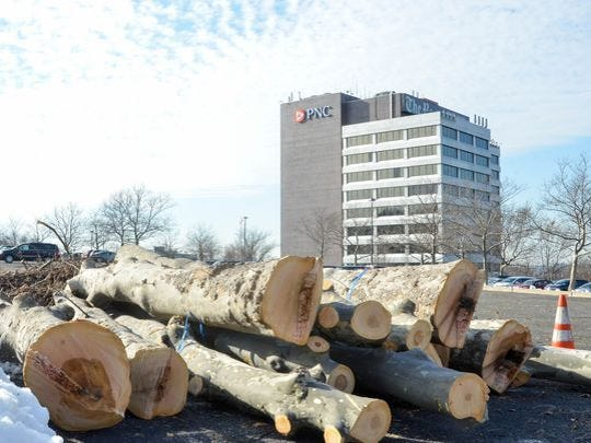 More than 100 trees were cut down to make way for solar panel canopies at an office park in Woodland Park.