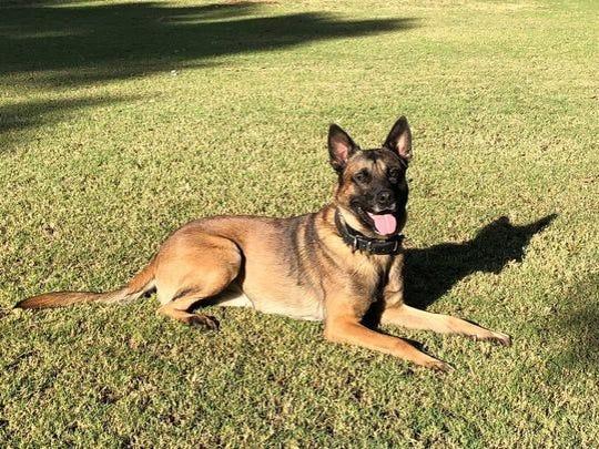 Phoenix police K-9, Bane, died on duty Tuesday.