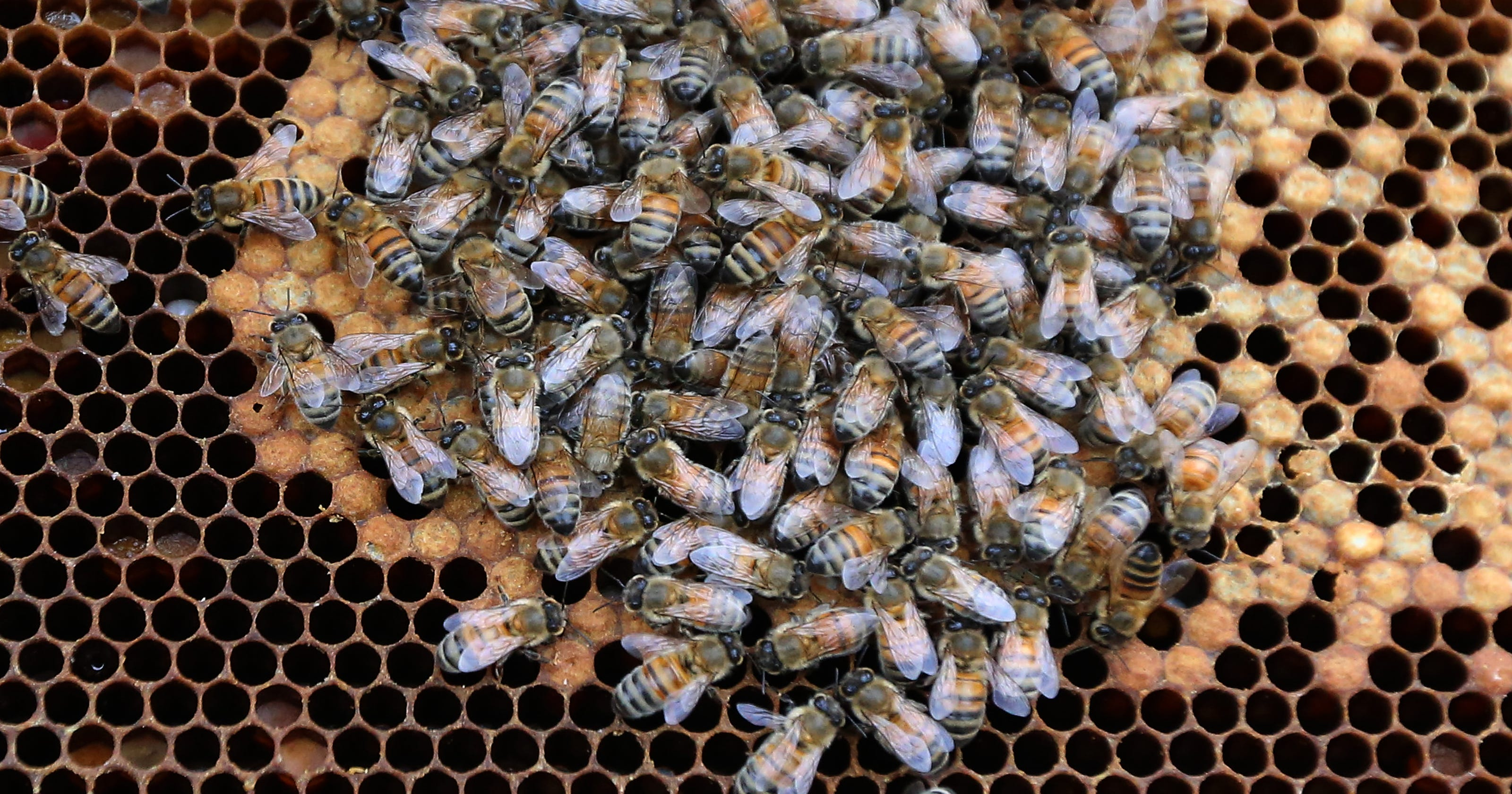 Urban Areas May Be Key To Growing Bee Populations