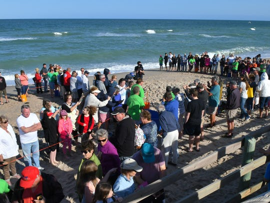 Brevard Zoo's Sea Turtle Healing Center released Raggedy