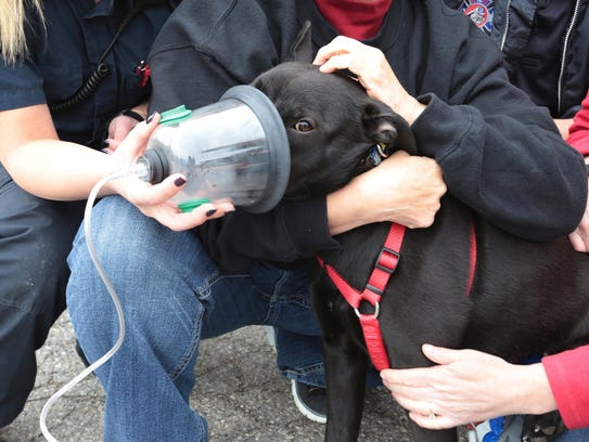 Woodhaven firefighters  demonstrate a pet oxygen mask.