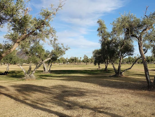 The western end of Los Olivos Park, proposed site for