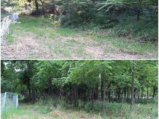 A patch of land in August 2014 before (top) and after