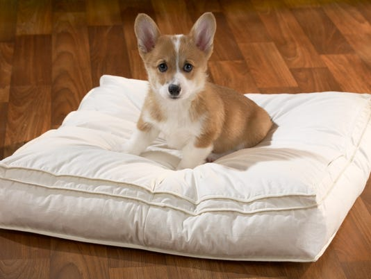 Pillowtop Pet Bed