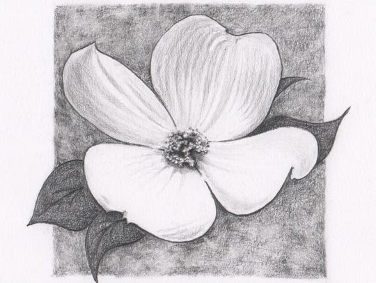"""Dogwood"" is one of the drawings by local artist Sarah"