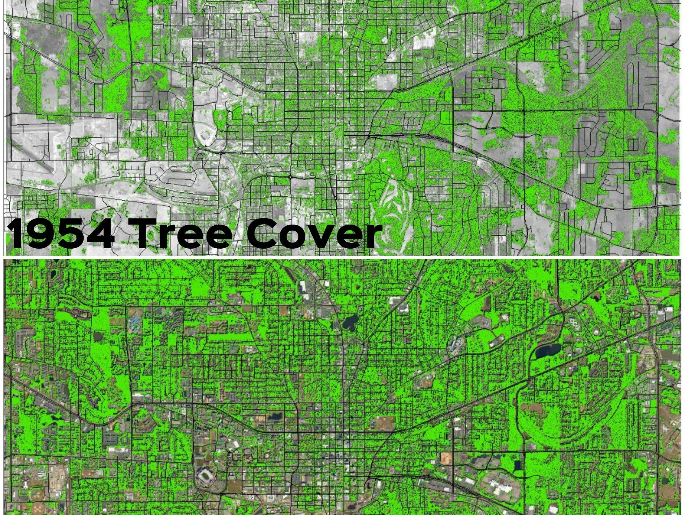 The City of Tallahassee says tree coverage has grown