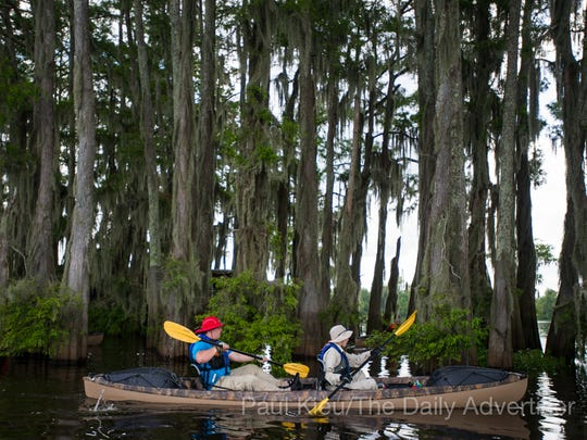 Members of Boy Scout Troop 383 of Evansville, Indiana, paddle near a large grove of cypress trees in the Atchafalaya Basin near Henderson, LA, Tuesday, July 1, 2014. The troop is currently participating in the Evangline Area Council's Swamp Base kayak trek which takes them on a sixty-mile path through the basin.    Photo by Paul Kieu, The Advertiser