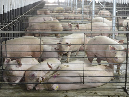 C&H Hog Farms opened in 2013, prompting several groups,