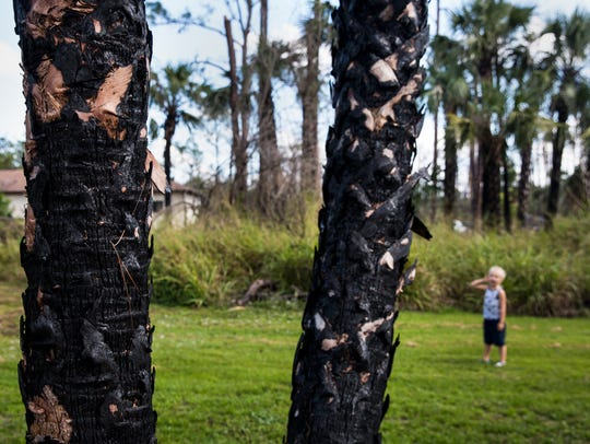 Burned trees line the property on Tuesday, Dec. 19,