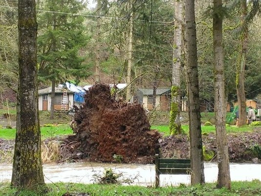 -tree roots.jpg_20140307.jpg