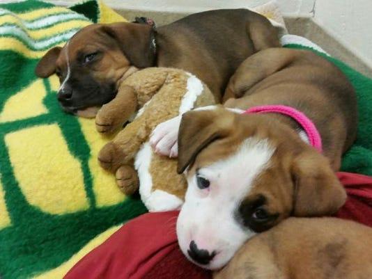 SPJ 0624 Abandoned puppies.jpeg