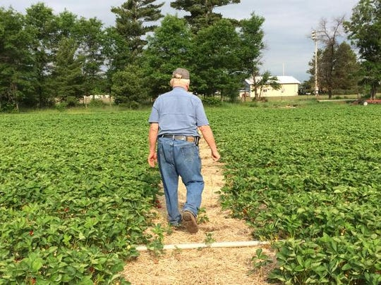 Harold Altenburg walks down the strawberry path at his farm.