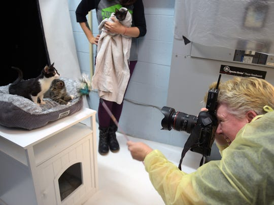 Penny Adams uses feathers to get kittens in the right pose for a portrait at the Williamson County Animal Center.