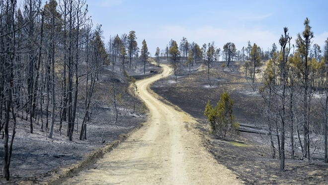 Tim Weyer believes that 24,000 of the 25,000 acres on the Calf Creek Cattle Ranch was burned in the Lodgepole Complex Fire.