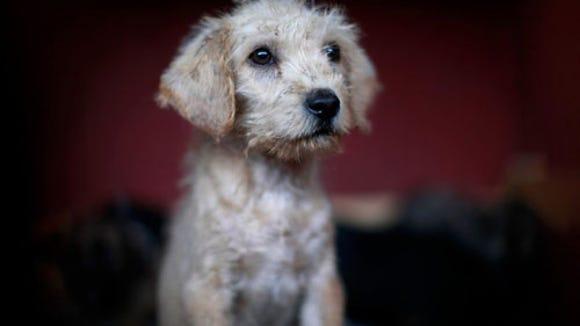 feral-puppy