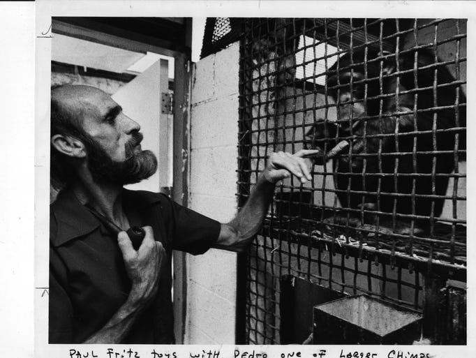 Paul Fritz toys with Pedro, one of the larger chimps