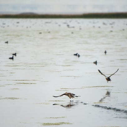 Low water will limit duck hunting at Benton Lake