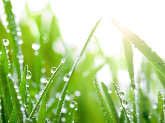 Close-up of green blades of grass with dew on