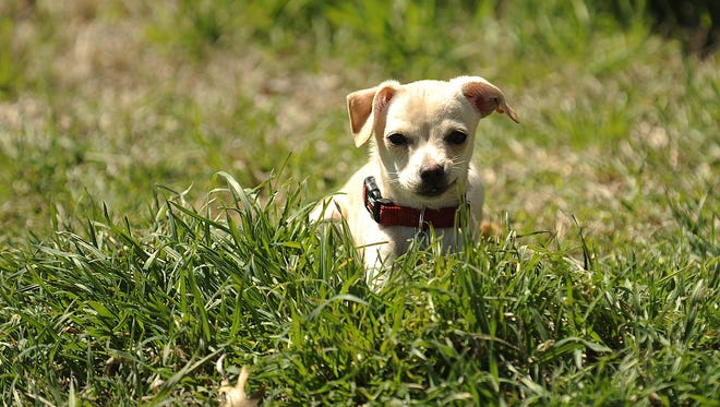 Parvo cases are on the rise in the area. If you have a puppy, make sure to get them vaccinated against the disease.