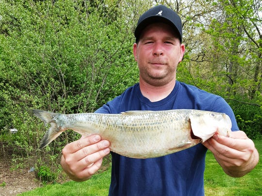 Steve Wengler broke the pole-and-line state record by catching a 2-pound, 5-ounce skipjack herring in the Mississippi River on April 17.