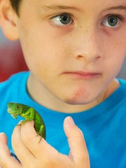An iguana and Chayce Gordon, 6, became fast friends Saturday at the Repticon show at the Crowne Plaza Fort Myers at Bell Tower Shops. Local vendors displayed and sold reptiles and exotic animals at the annual show.