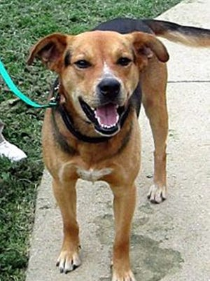 Will has been trained in manners and basic obedience commands at the prison dog training program.