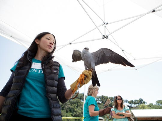Lena Chang shows off a Mississippi kite during the Ojai Raptor Center open house in 2017. This year's open house will be from noon to 4 p.m. April 8.