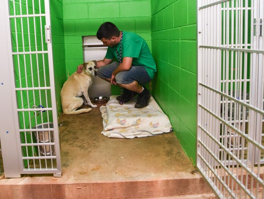 Worker Matthew Eldridge visits Zena, one of the dogs