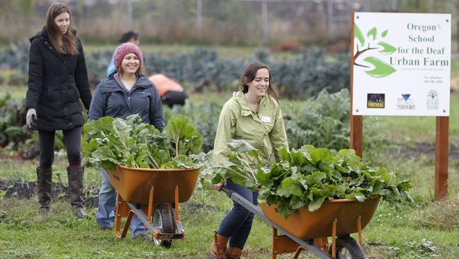 Stephanie Haynes, right, Katie Engelman and Sarah Whitney transfer beets they picked at the Marion-Polk Food Share youth farm on Saturday Oct. 25, 2014 in Salem.