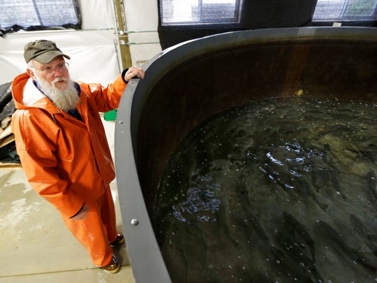 Bill Fairgrieve checks on a tank housing sablefish at a research facility in Manchester, Wash.
